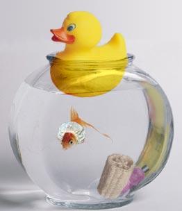 goldfish bath time