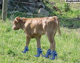 Nice Calves!
