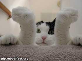 legs kitty