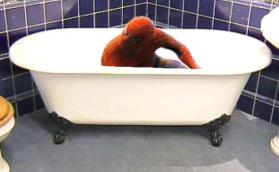 Spiderman, Spiderman, does whatever a spider can, spins a web, gets stuck in your bath