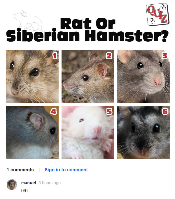 Answer: 1, 4 and 6 are hamsters