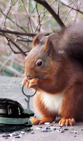 Time-delay squirrel-mince!